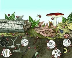 Know soil know life soils 4 teachers for Soil our life