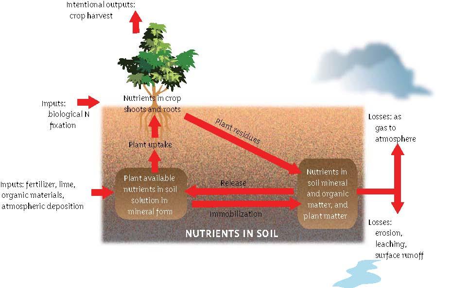 Carbon cycle soils 4 teachers for Soil 4 teachers