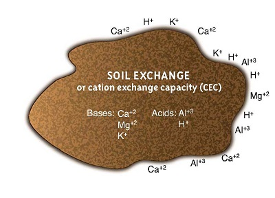Soil cation exchange capacity