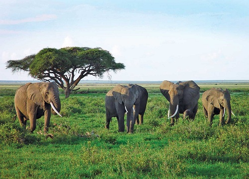 The asian savanna grassland