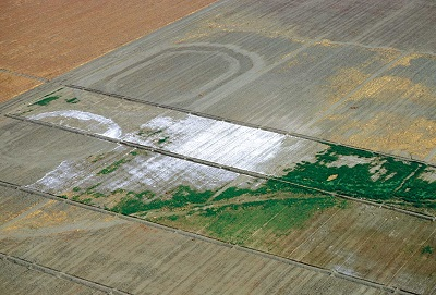 A Field Showing Salt Accumulation