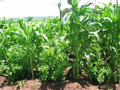 Nitrogen cycle soils 4 teachers for Soil 4 teachers