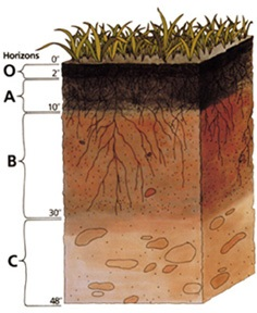 Soil horizons soils 4 teachers for Different types of soil wikipedia