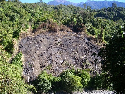 Land Clearing for Cultivation