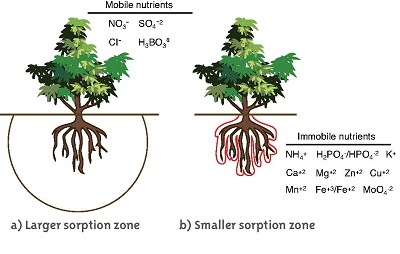 plant nutrients move in the soil