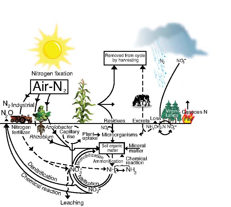 nitrogen cycle soils 4 teachers
