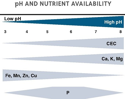 soil pH and plants